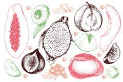 Vector hand drawn exotic fruits. Engraved smoothie bowl ingredients. Tropical sweet food. Carambola, guava, papaya, fig. Mango, banana, acai, pitaya, lychee Royalty Free Stock Image
