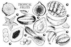 Vector hand drawn exotic fruits. Engraved smoothie bowl ingredients. Tropical sweet food. Carambola, guava, papaya, fig. Mango, banana, acai, pitaya, lychee Stock Photography