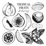 Vector hand drawn exotic fruits. Engraved smoothie bowl ingredients. Tropical sweet food delivery. Guava, fig, coconut Stock Photos