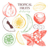 Vector hand drawn exotic fruits. Engraved smoothie bowl ingredients. Tropical sweet food delivery. Guava, fig, coconut Stock Photography