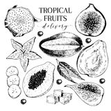 Vector hand drawn exotic fruits. Engraved smoothie bowl ingredients. Tropical sweet food delivery. Royalty Free Stock Photos