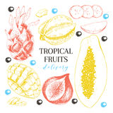 Vector hand drawn exotic fruits. Engraved smoothie bowl ingredients. Tropical sweet food delivery. Pitaya, carambola Royalty Free Stock Images