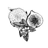 Vector hand drawn exotic fruits. Engraved smoothie bowl ingredients. Tropical sweet food. Half sliced pitaya, fig and. Plumeria frangipany. Use for exotic Stock Photo