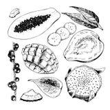 Vector hand drawn exotic fruits. Engraved smoothie bowl ingredients. Tropical sweet food. Papaya, acaci, guava, pitaya. Fig, mango, banana, coconut Use for Royalty Free Stock Photo