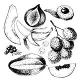 Vector hand drawn exotic fruits. Engraved smoothie bowl ingredients. Tropical sweet food. Papaya, fig, lychee, acai Royalty Free Stock Photography
