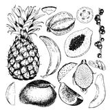 Vector hand drawn exotic fruits. Engraved smoothie bowl ingredients. Tropical sweet food. Pineapple, papaya, fig, mango. Banana, acai, pitaya, coconut Use for Royalty Free Stock Photo