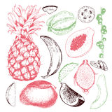 Vector hand drawn exotic fruits. Engraved smoothie bowl ingredients. Tropical sweet food. Pineapple, papaya, fig, mango Stock Photography
