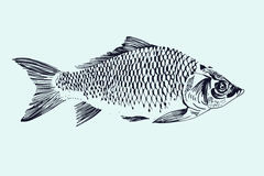 Vector hand drawn fish illustration Royalty Free Stock Photography