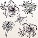 Vector hand drawn flowers Royalty Free Stock Image