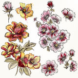 Vector hand drawn flowers in engraved and watercolor style Royalty Free Stock Photography
