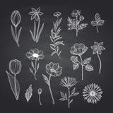 Vector hand drawn flowers set on black chalkboard illustration stock illustration