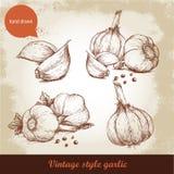 Vector hand drawn garlic set. Stock Photography