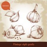 Vector hand drawn garlic set. Royalty Free Stock Photography