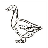 Vector hand drawn Goose simple sketch illustration on white background. royalty free illustration