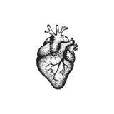 Vector hand drawn heart illustration stock illustration
