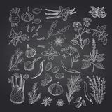 Vector hand drawn herbs and spices on black chalkboard illustration vector illustration