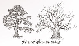 Vector hand drawn high detailed trees for design Royalty Free Stock Images