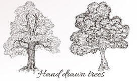 Vector hand drawn high detailed trees for design Royalty Free Stock Photography