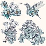 Vector hand drawn hummingbirds for design Royalty Free Stock Photo