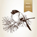 Vector hand drawn illustartion of bullfinch bird. Vintage engraved Isolated on grunge background. Christmas decoration. Stock Image