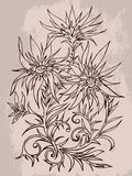Vector hand drawn illustration with contour of flowers on textur Stock Photos