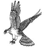 Vector hand drawn illustration of decorative eagle Royalty Free Stock Image