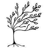 Vector hand drawn illustration, decorative ornamental stylized tree. Black and white graphic illustration isolated on the white background. Inc drawing Royalty Free Stock Images