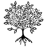 Vector hand drawn illustration, decorative ornamental stylized tree. Black and white graphic illustration isolated on the white background. Inc drawing Stock Images