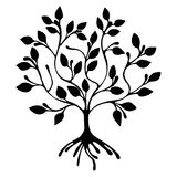Vector hand drawn illustration, decorative ornamental stylized tree. Black and white graphic illustration isolated on the white background. Inc drawing Royalty Free Stock Photos