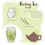 Vector hand drawn illustration of kuding tea recipe with list of ingredients Stock Photos