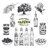 Vector hand drawn illustration with olives and. Olive oil. Sketch Royalty Free Stock Photo