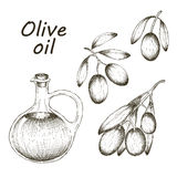 Vector hand drawn illustration with olives and olive oil. Sketch. Stock Images
