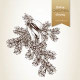 Vector hand drawn illustration of pine tree branch decorated with bow and holly berries.Christmas decoration. Royalty Free Stock Photo