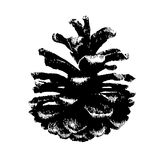 Vector hand drawn illustration with pinecone Royalty Free Stock Photo