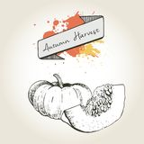 Vector hand drawn illustration of pumpkin slices. Engraved autumn vegetable isolated on vintage background. Royalty Free Stock Image