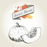 Vector hand drawn illustration of pumpkin slices. Engraved autumn vegetable isolated on vintage background. Stock Photo