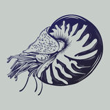 Vector hand drawn illustration of shellfish nautilus in realistic style. Stock Image