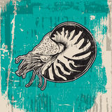 Vector hand drawn illustration of shellfish nautilus in realistic style. Royalty Free Stock Photo
