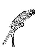 Vector hand drawn illustration of tropical parrot bird. Isolated monochrome parrot. Stock Image