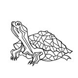 Vector hand drawn illustration of turtle. Royalty Free Stock Image