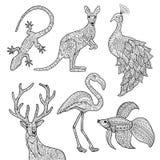 Animal illustration. Vector hand drawn illustrations of animals. Lizard, kangaroo, peacock, deer, flamingo, betta fish. Adult coloring page Royalty Free Stock Images