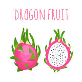 Vector hand drawn isolated dragon fruit with the inscription. Stock Photography