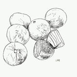 Vector hand drawn lime set. Whole lime, sliced pieces, half, lea. F. Hand drawn sketch line art , created outline vector. Detailed citrus drawing Royalty Free Stock Images