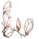Vector hand drawn magnolia flowers frame Stock Images
