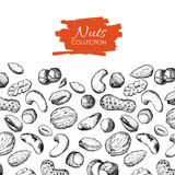 Vector hand drawn nuts illustration. Stock Photo