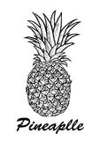Vector hand drawn pineapple. Exotic tropical fruit vector drawings isolated on white background. Botanical illustration Stock Images