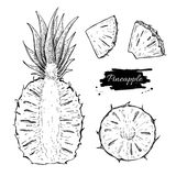 Vector hand drawn pineapple and sliced pieces set. Tropical summer fruit engraved style illustration. Detailed food drawing. Great for label, poster, print royalty free illustration