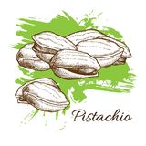 Vector hand drawn Pistachios illustration. Engraved collection Royalty Free Stock Photo