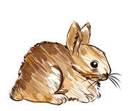 Vector of hand drawn rabbit. On white background Royalty Free Stock Photo