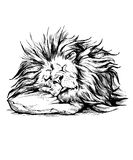 Vector hand drawn realistic sleeping lion Stock Images